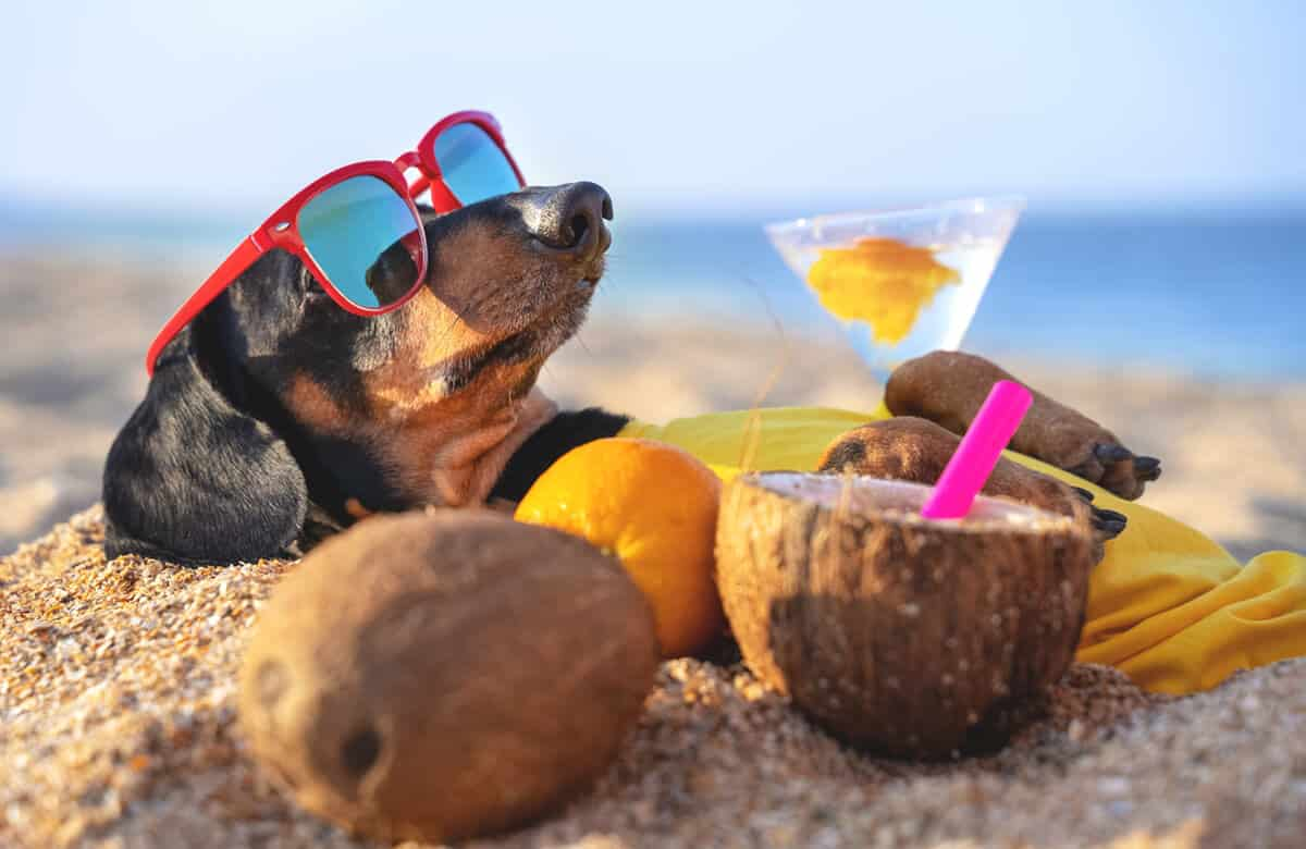 Sommerloch Marketing – Was tun, wenn die Kunden in der Sonne am See liegen?